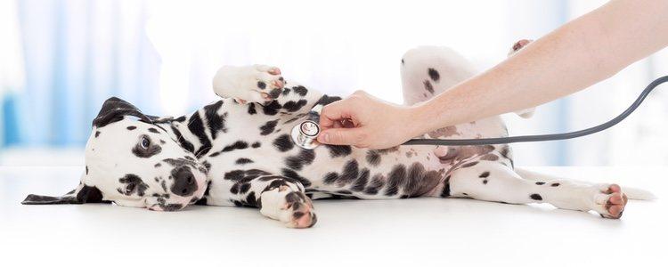 Para llevar a los cachorros al veterinario es aconsejable taparlos con una manta