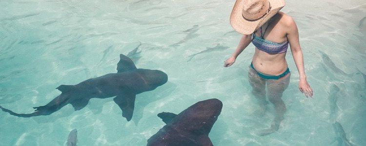 Si te has decidido a nadar con tiburones es recomendable que realices la actividad en grupo