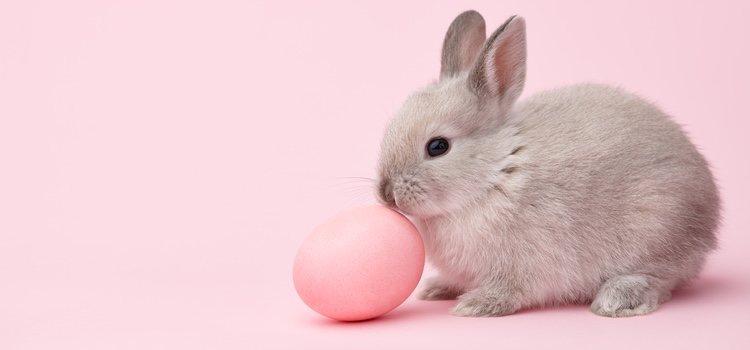 El embarazo de una coneja es algo a lo que hay que prestar mucha atención