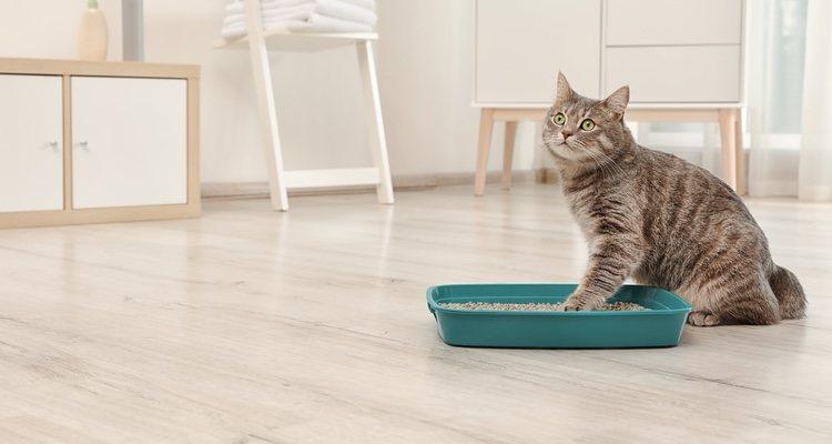 Es importante que el gato tenga su arenero durante la etapa en soledad