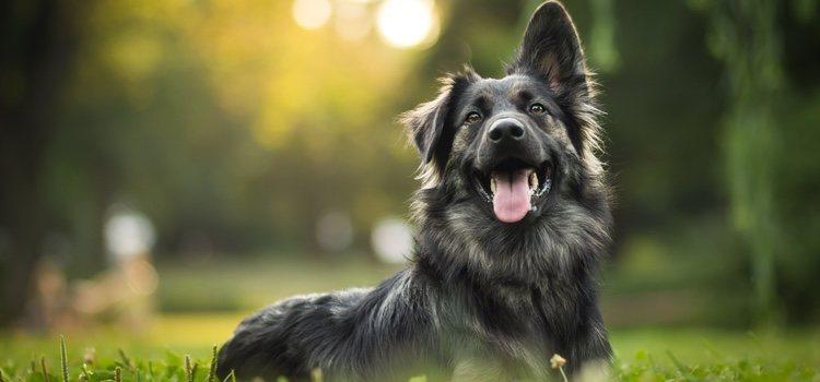 No hay que tomar decisiones sin consultar con un veterinario