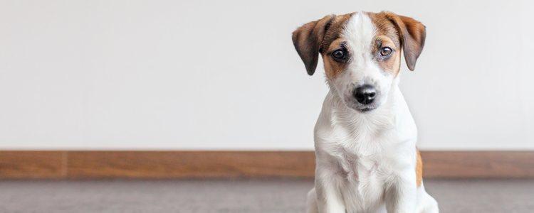 La sarna es considerada la enfermedad de los animales y puede ser contagiosa para el ser humano