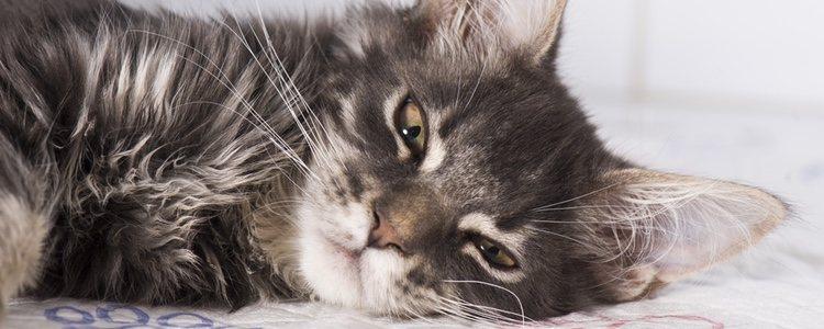 Si los vómitos han sido sucesivos el veterinario le proporcionará suero