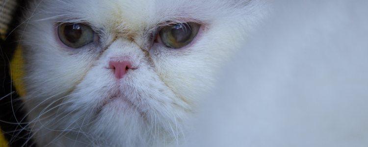 Esta enfermedad daña el nervio óptico y produce ceguera en el animal