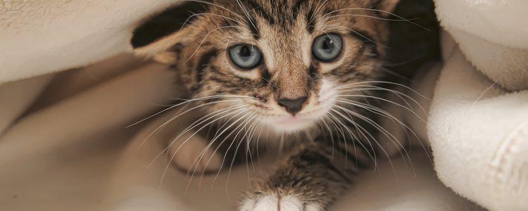 Al cabo de los años los gatos van desarrollando diferentes patología en los ojos