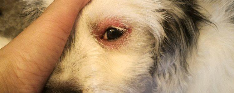 Hay que tener mucho cuidado, una conjuntivitis seca puede provocar un severo daño en la piel
