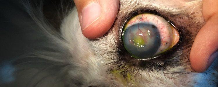 En el peor de los casos algunas enfermedades oculares pueden provocar al ceguera