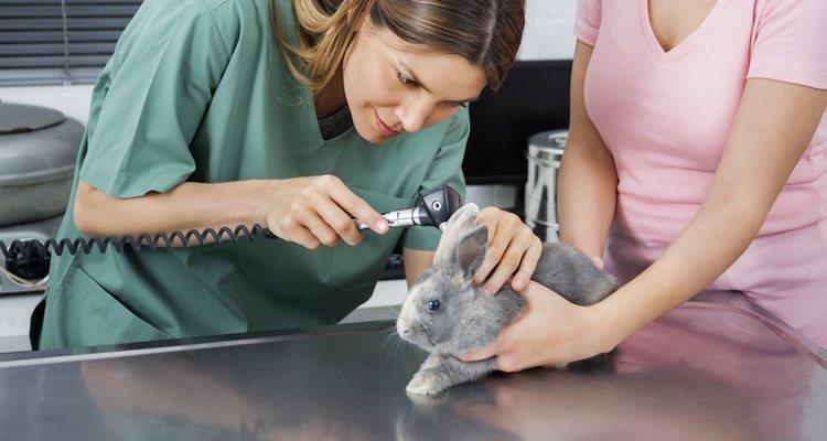 La mixomatosis afecta a los conejos y ocasiona la muerte