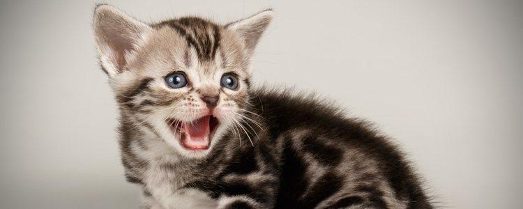 Las espículas tienen el mismo tacto que la lengua del gato, áspero