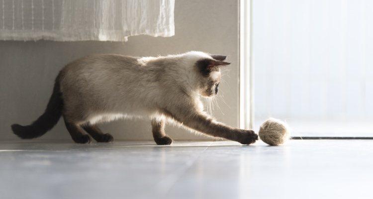 Es importantísimo saber cómo averiguar si tu gato tiene bola de pelo