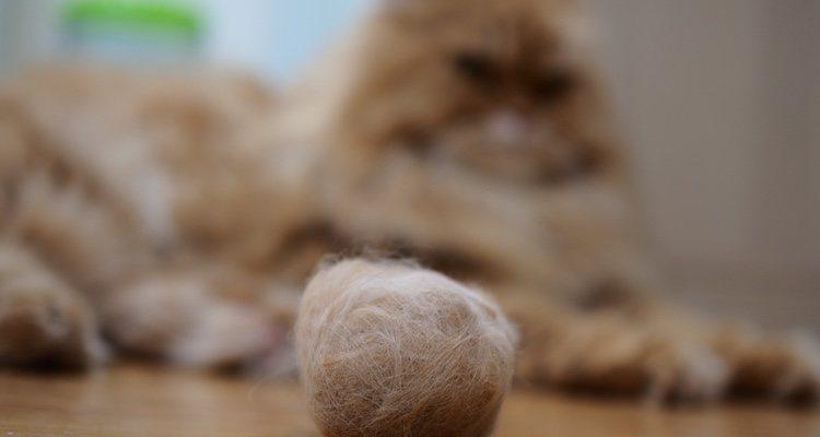 Los probióticos pueden ser una opción muy buena para la bola de pelo