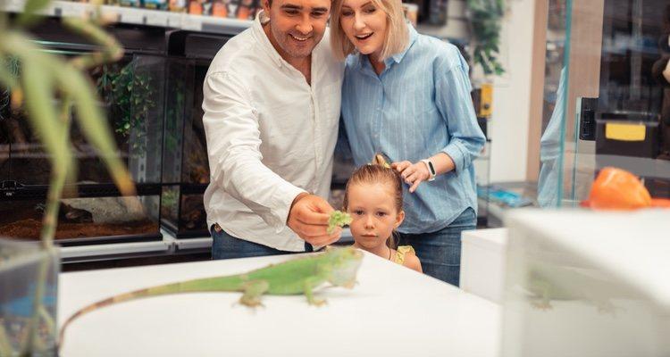 La iguana bebé tiene su propio tipo de alimentación que se debe tener en cuenta