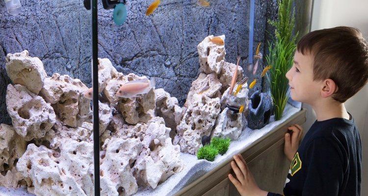 Hay que tener en cuenta el tipo de acuario a la hora de tener un pez Argos