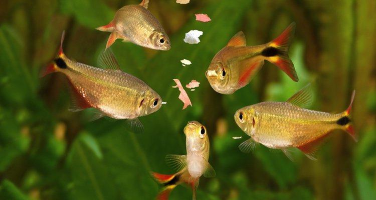 La alimentación para los peces es muy importante