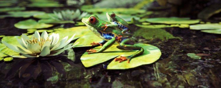 La piel de las ranas es suave, lisa y escurridiza