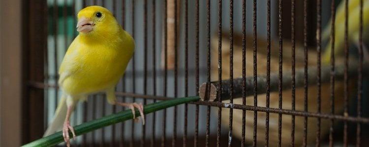 Los pájaros son muy sensibles dentro del mundo doméstico