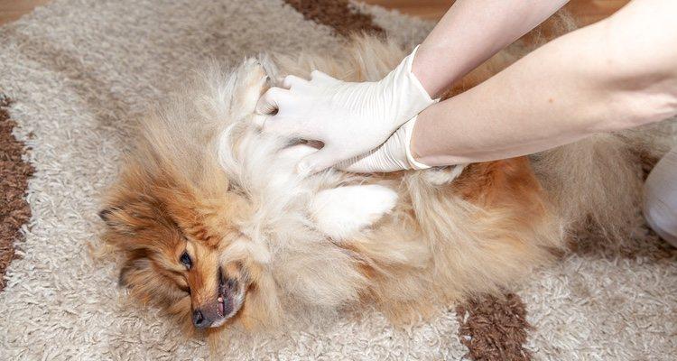 Hay que actuar de forma rápida y sin nervios, poniéndose en contacto con el veterinario
