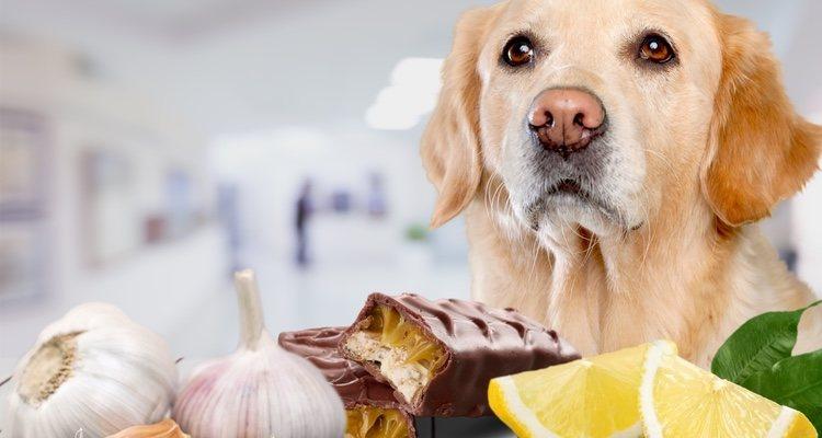 La cebolla y el ajo pueden sentar mal a tu mascota llegando incluso al envenenamiento