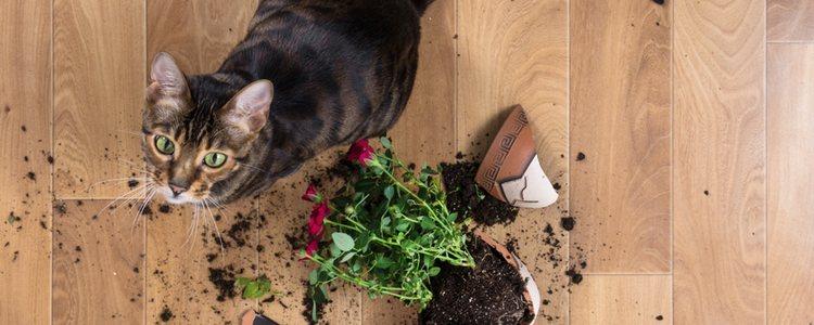 Hay plantas que pueden ser mortales para nuestro gato