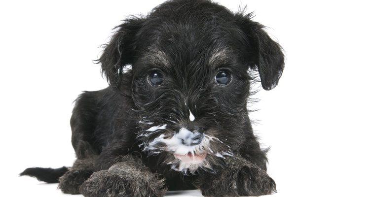 Es importante saber la cantidad de yogur que se le puede dar al perro para no pasarse
