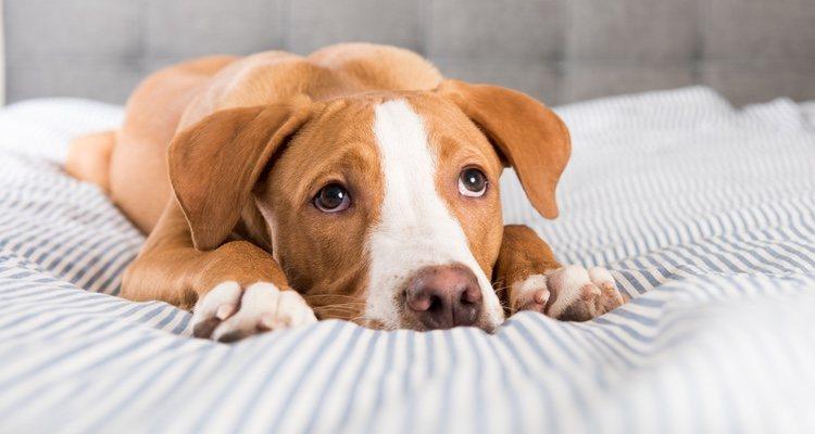 Hay algunos efectos secundarios que pueden afectar a tu perro