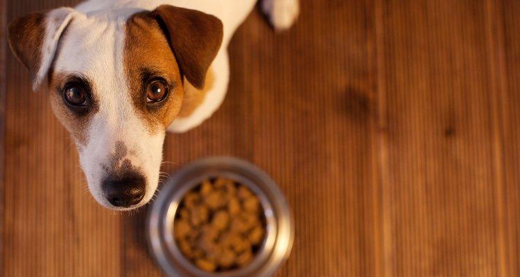 Hay algunos alimentos que conviene no darle a un perro con diabetes