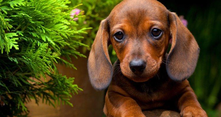 Hay que prestar especial atención a los problemas de salud que pueda tener tu perro mini