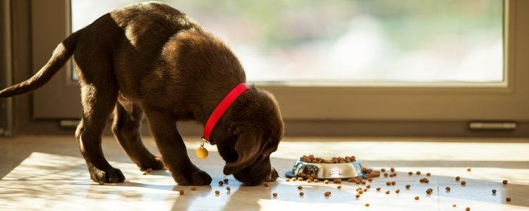 Tras la operación tu mascota perderá el apetito