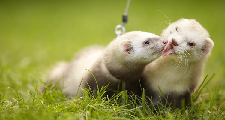 Es importante saber que el animal necesitará unos cuidados postoperatorios