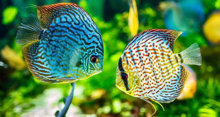 Los peces pueden tener diferentes tipos de sueño y hay que saber cuáles son
