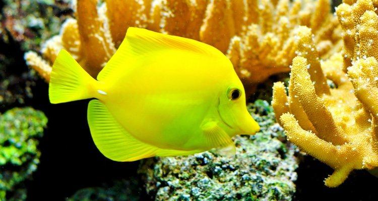 Los peces suelen flotar cuando duermen