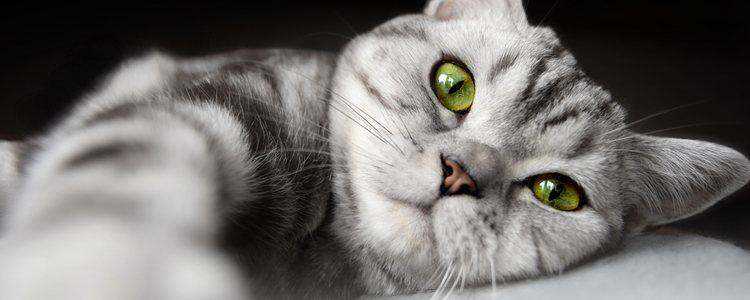 La comida más indicada para los gatos con diabetes es una dieta específica