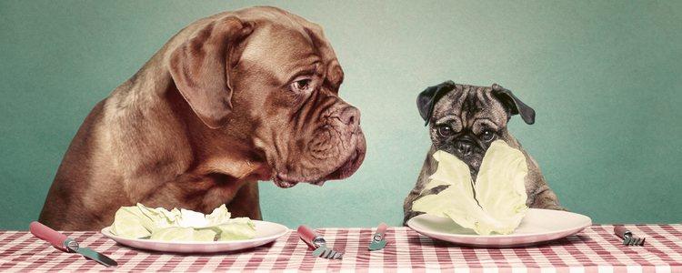 Es importante hacer chequeos periódicos en nuestros perros