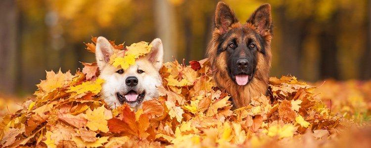 Durante el otoño hay que tener un cuidado especial con las mascotas