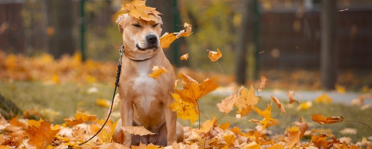 Las mascotas también notan el cambio de horario, por lo que hay que modificarlo poco a poco