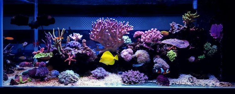 Los peces procedentes de las profundidades del océano necesitarán menos luz