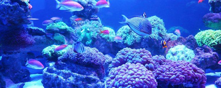 Los peces que hacen su vida a gran distancia de la superficie necesitarán una luz azul