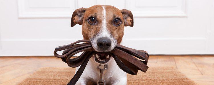 La compañía de un perro es muy importante