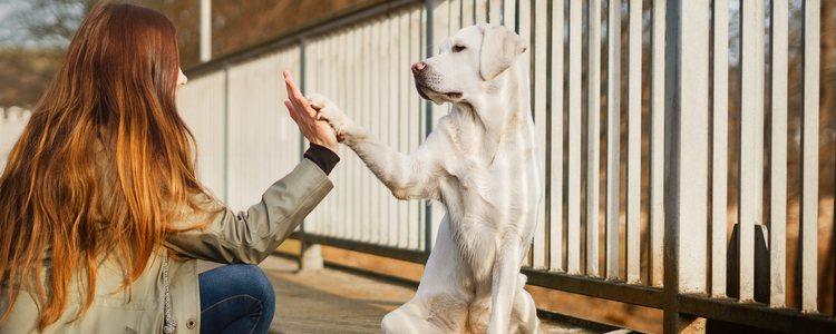 Se puede apadrinar tanto a uno como a varios perros