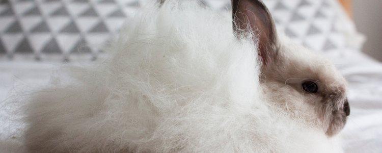 Se recomienda mantener el pelaje del conejo buen estado