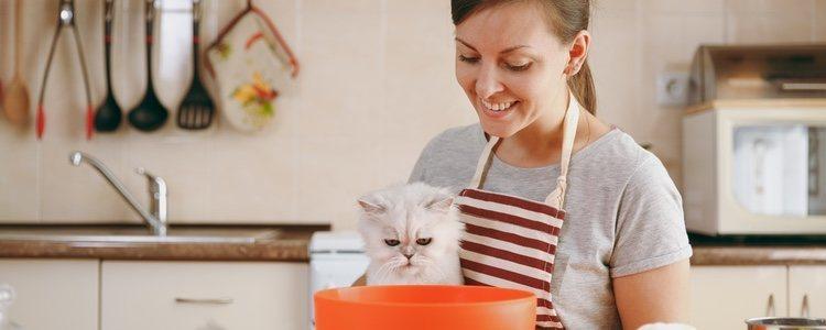Положите корм в воду перед тем, как давать его кошке, и вы насытите его.