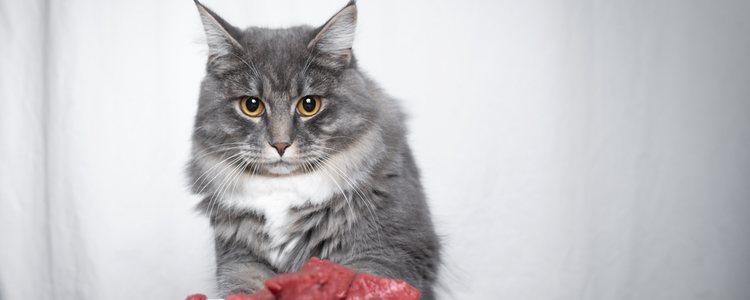 Кошкам требуется сбалансированный рацион