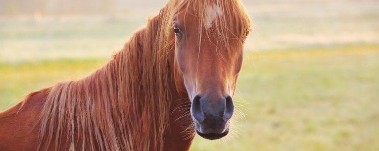 A través de sus movimientos los caballos expresan sus sentimientos