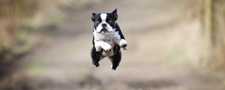 Para hacer Doga no importa la edad, el tamaño o la raza del perro