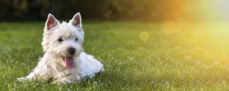 El lugar perfecto para practicar Doga es donde el perro se sienta a gusto