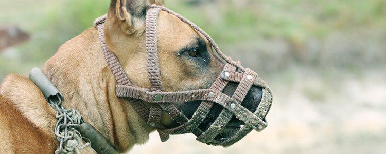 Al llevar bozal, los perros no pueden jadear