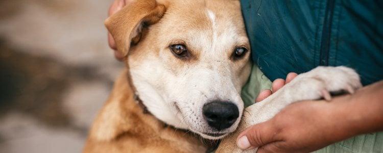 Los perros mestizos también se considera una raza peligrosa