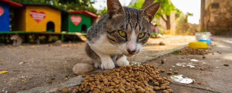 Hay que vigilar siempre el tipo de alimentación de la mascota