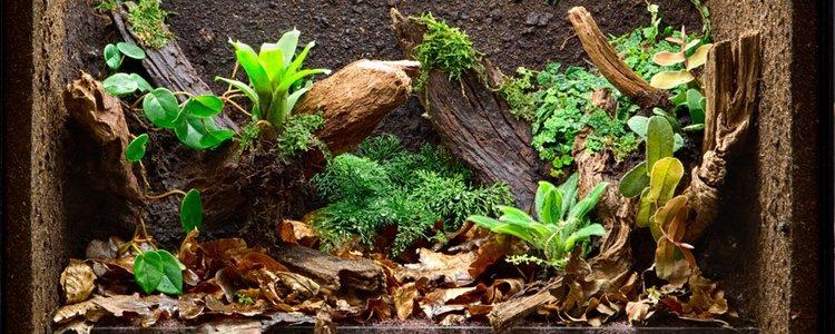 El terrario tiene que estar cerrado para que la rana no salte y se salga