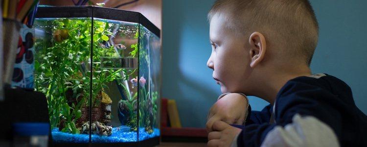 La zeolita es un producto de origen natural que ayudará a filtrar tu acuario